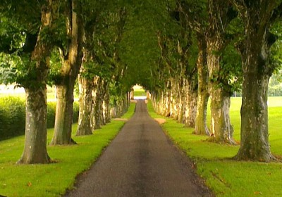 chemin arborisé d'une propriété renommé à Genève visité par un agent immobilier d'une agence Immobilière