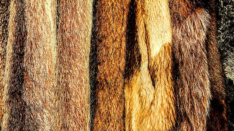 abstract; animal; background; brown; cloth; clothing; coat; color; decoration; decorative; design; detail; elegance; exotic; fashion; fashionable; fur; furry; garment; hair; hairy; interesting; luxurious; luxury; material; multicolored; natural; opulence; opulent; pattern; print; skin; soft; spotted; strange; style; texture; textured; warm; white; wild; winter;